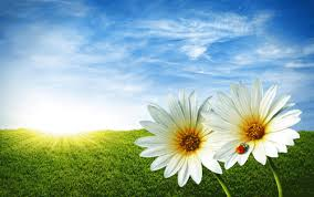 spring fever 1